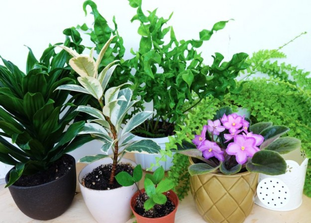 top 10 indoor plants 768x553 v2